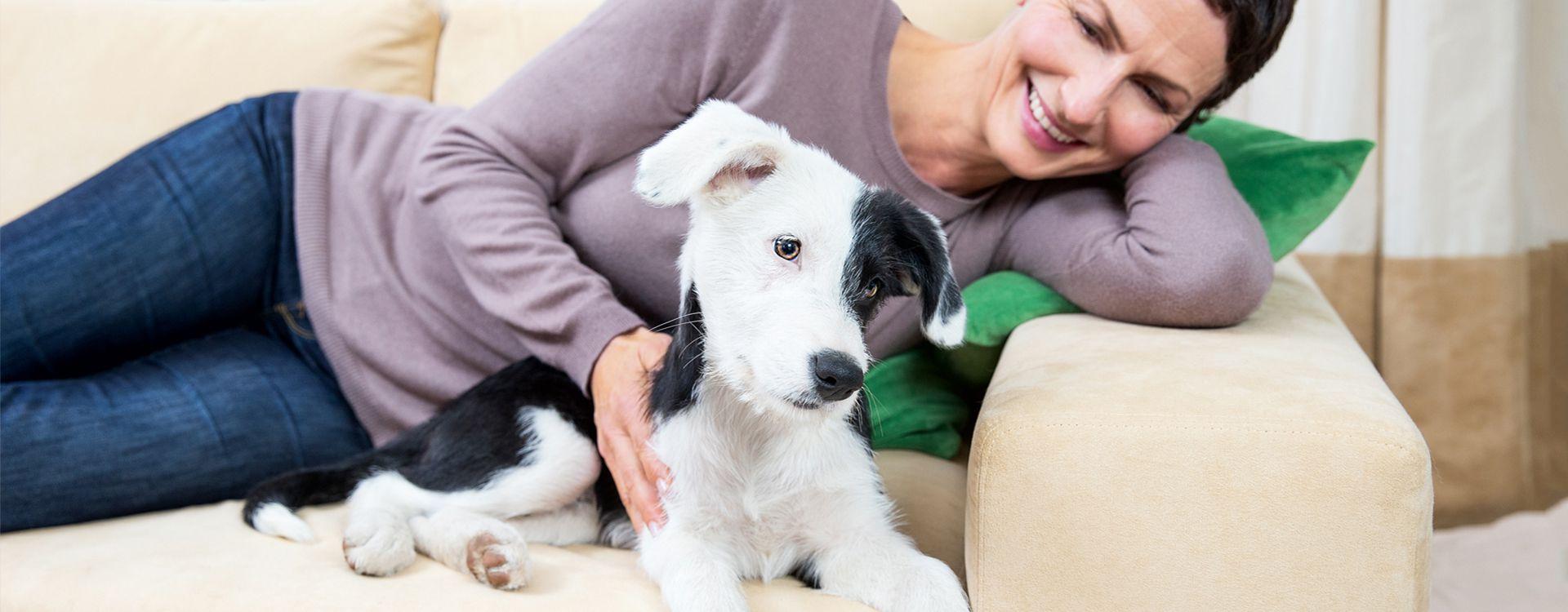 Ratgeber: Ein Hund zieht ein